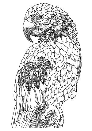 free animal coloring pages for adults