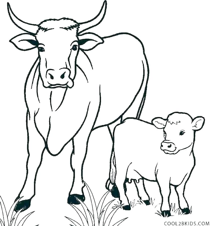 free coloring pages cows dopravnisystem