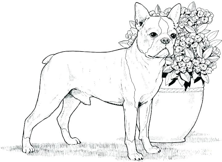 free coloring pages dogs colouring dog mimotelclub
