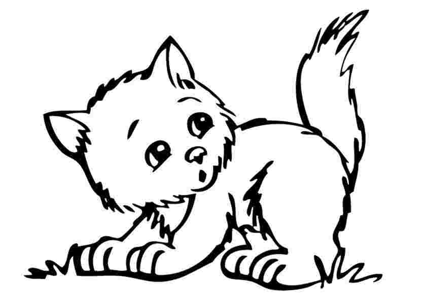 free coloring pages of a kitten kitten coloring pages best
