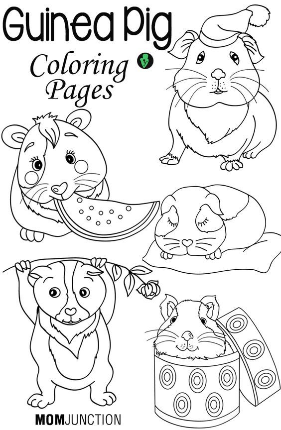free guinea pig coloring pages download free clip art free