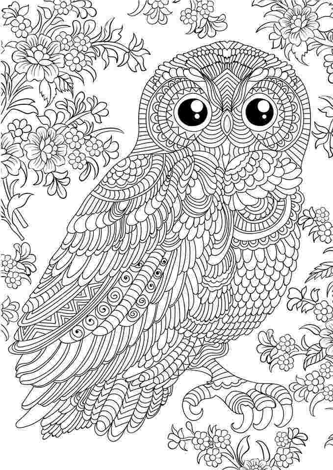 free owl coloring pages for adults diceowl free printable
