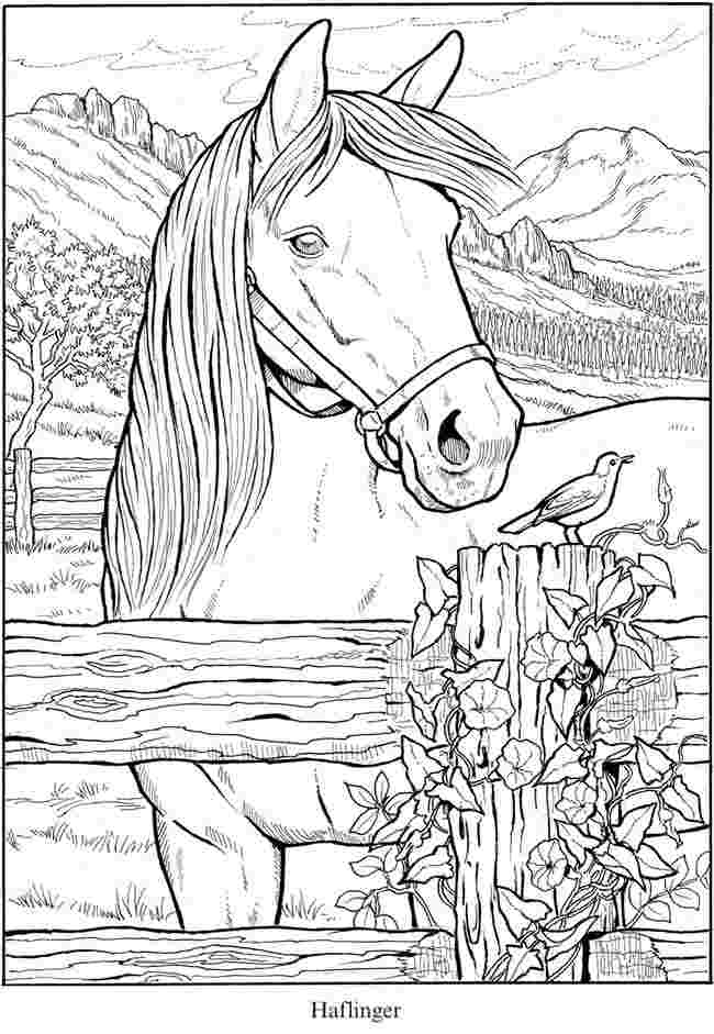 free printable coloring horses horse coloring pages