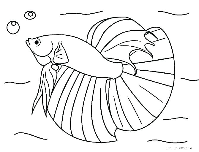 free printable fish coloring pages koi sefoxclub