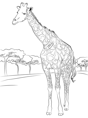 giraffe coloring pages jeromepilette