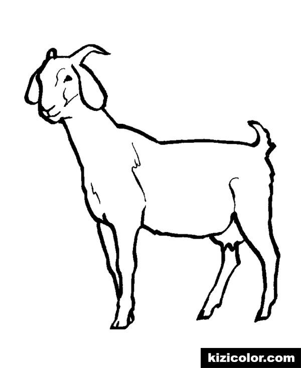 Goat Coloring Pages Ideas - Whitesbelfast.com