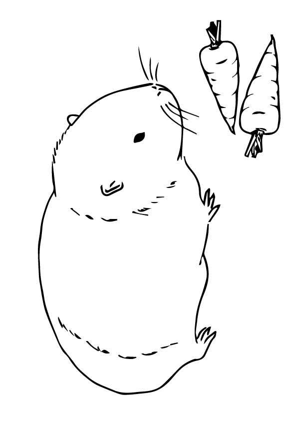 guinea pig coloring pages books 100 free and printable