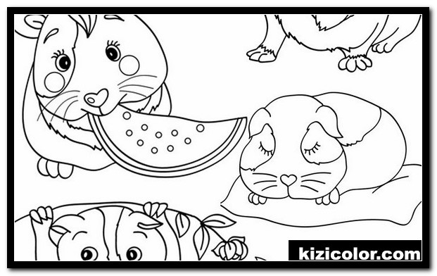 guinea pig coloring pages free printable coloring pages