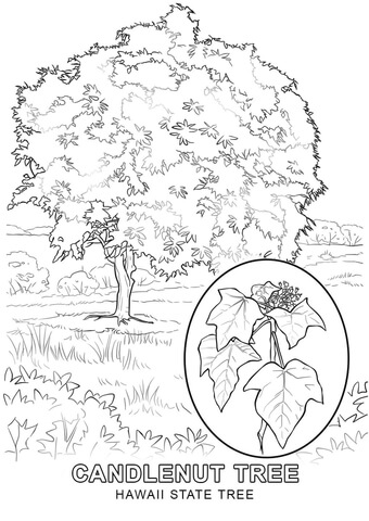 hawaii state tree coloring page free printable coloring pages