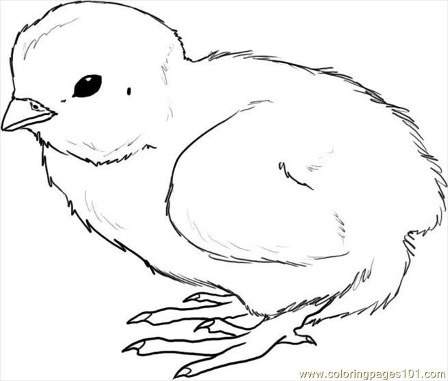 how to draw a chick step 4 coloring page free chick