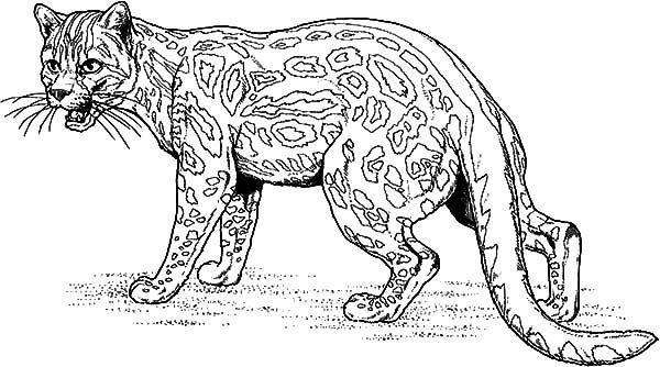 jaguar fighting jaguar coloring pages fighting jaguar