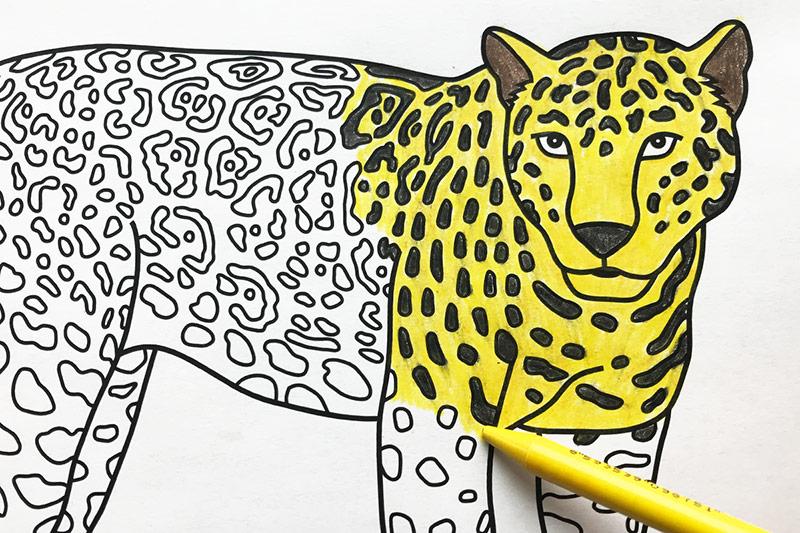 jaguar free printable templates coloring pages