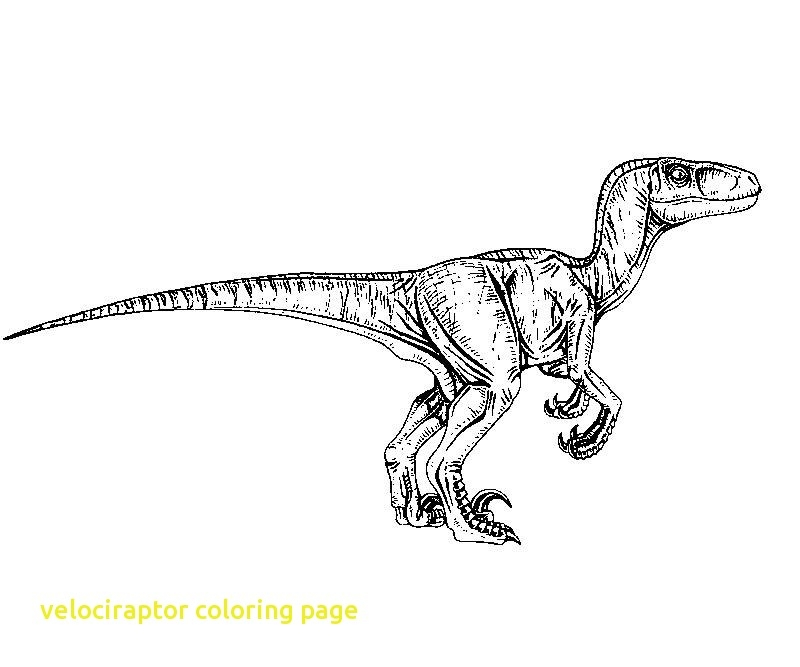 jurassic world coloring pages velociraptor free fun for kids