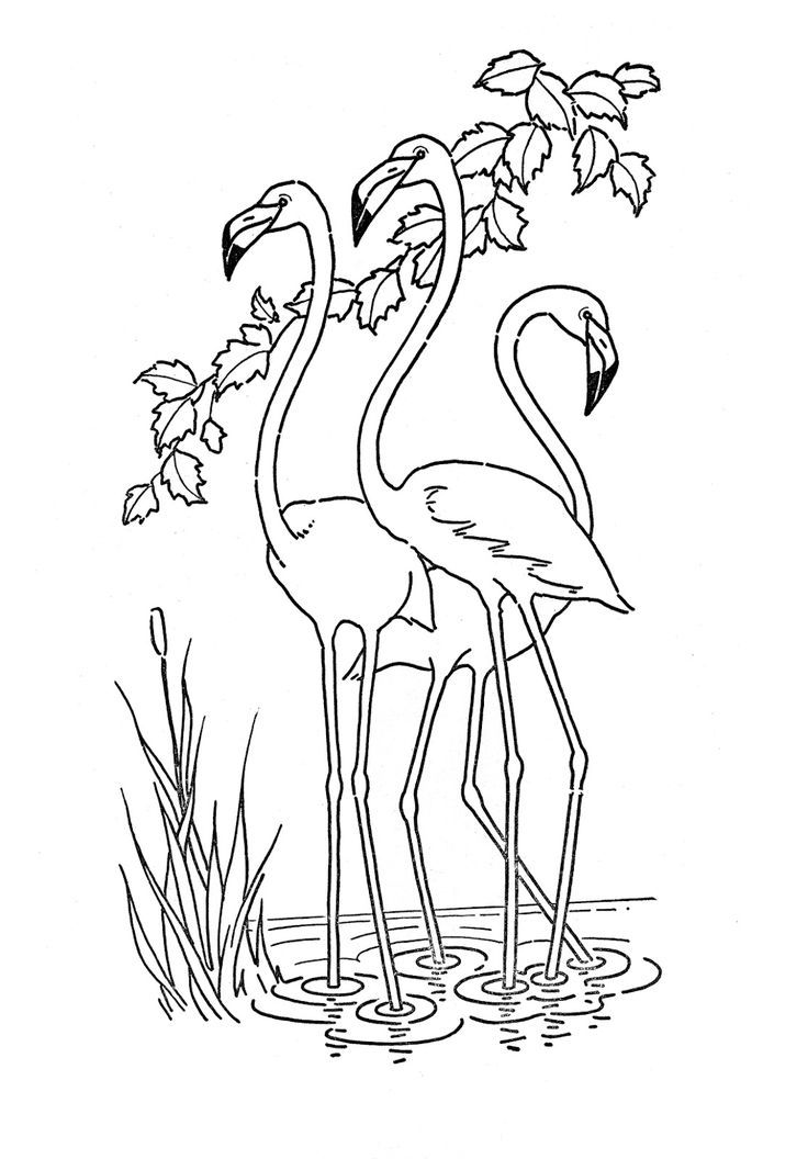kids printable flamingo coloring page flamingo