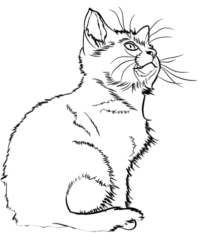 kitten coloring page free printable coloring pages