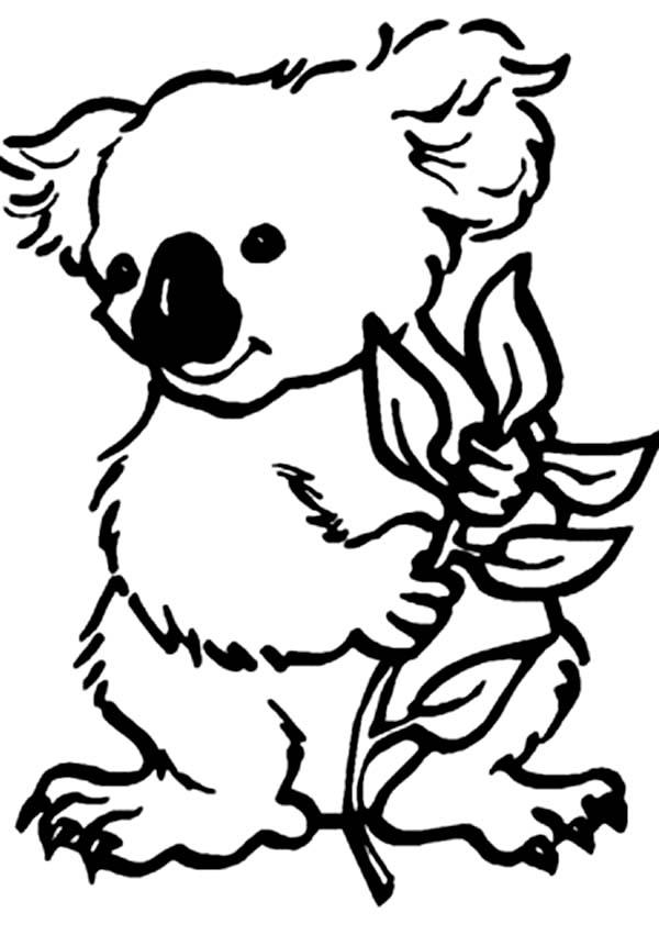 koala bear printable coloring pages