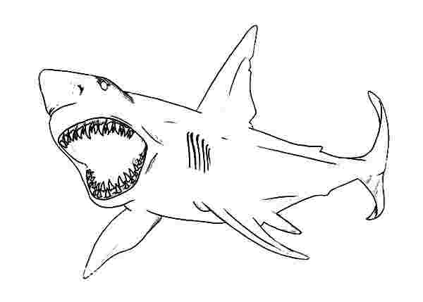 lego shark coloring pages megalodon coloring pages coloring