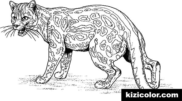 leopard ready to fight pages kizi free coloring pages