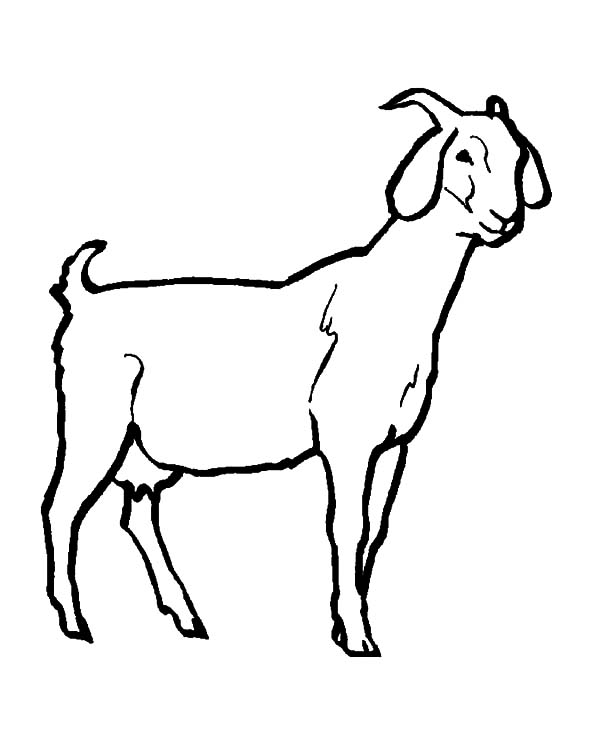 livestock goat coloring pages color luna farm coloring