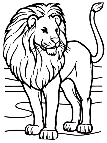male african lion coloring page free printable coloring pages