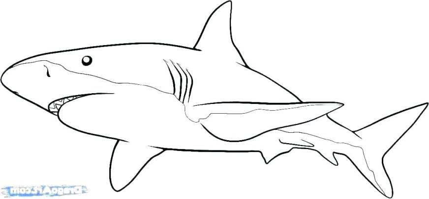 megalodon shark coloring pages page how to print gameuzclub