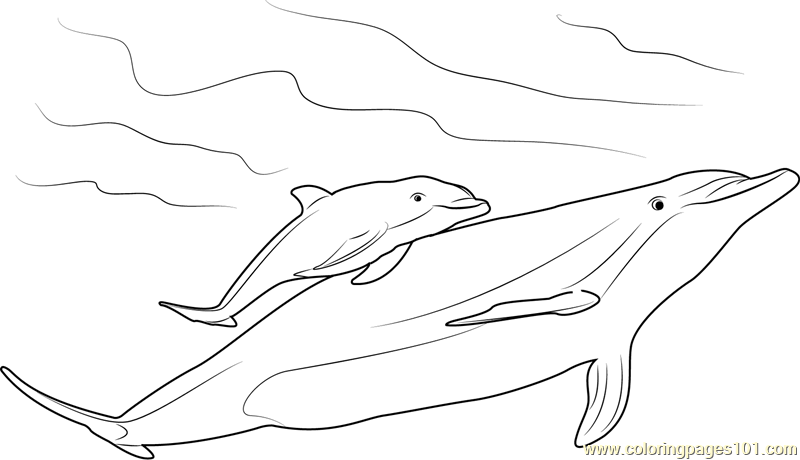 mother and ba dolphin coloring page free dolphin