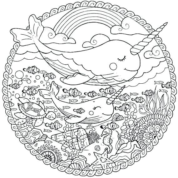 narwhal coloring page pizzafoodclub