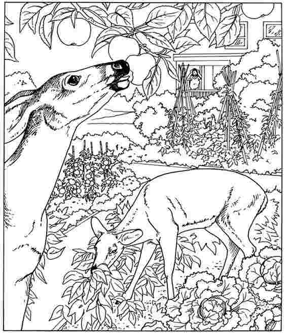 nature coloring pages pdf nature coloring pages to download