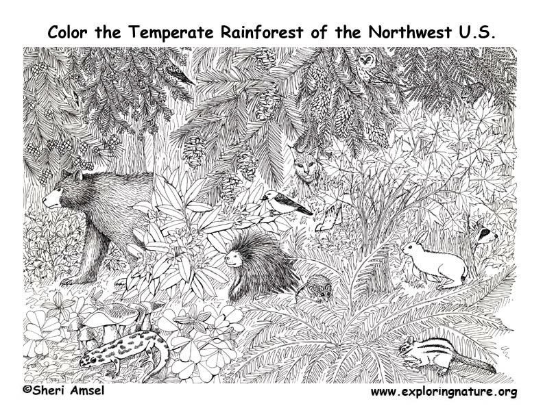 pacific northwest animals temperate rainforest coloring page