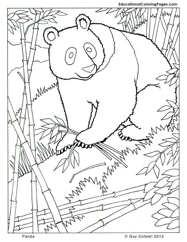 panda coloring zoo animals coloring cute free printables