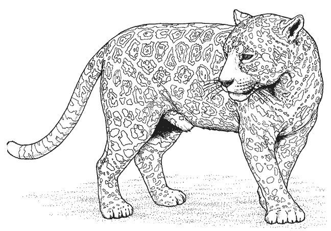 panther coloring pages cat coloring page animal coloring