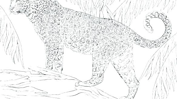 panther coloring pages easy sheet noticiagrapclub