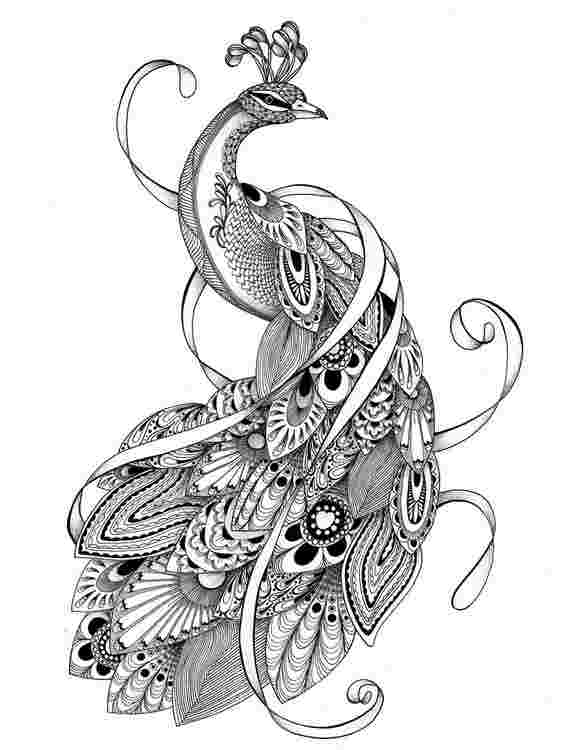 peacock coloring pages colouring pages adult coloring pages