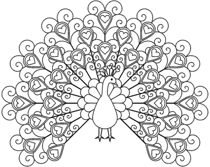 peacock coloring pages to print collection fun for kids