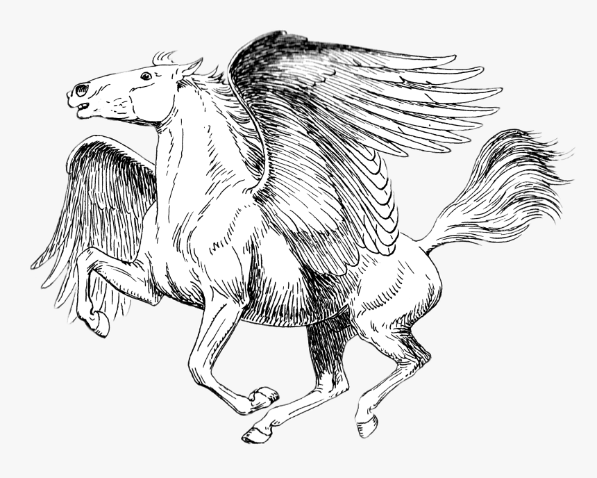 pegasus black and white drawing realistic pegasus coloring