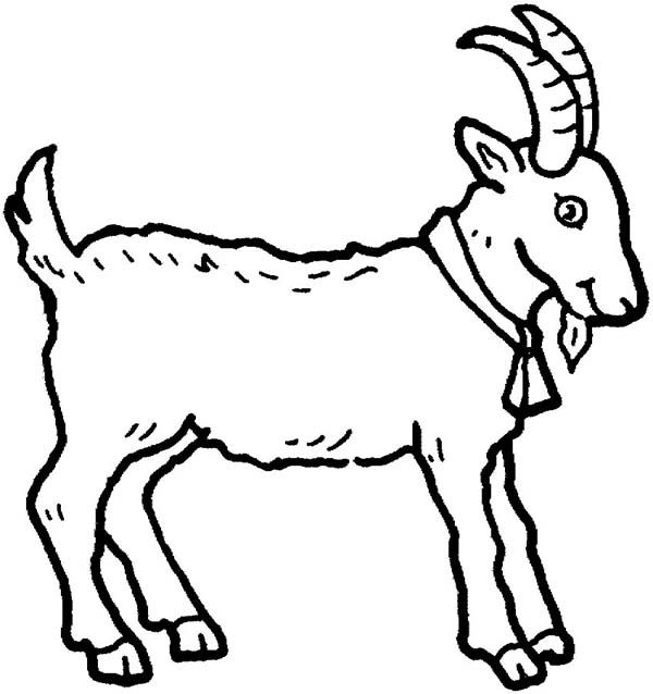picture of a goat in farm animal coloring page kids play