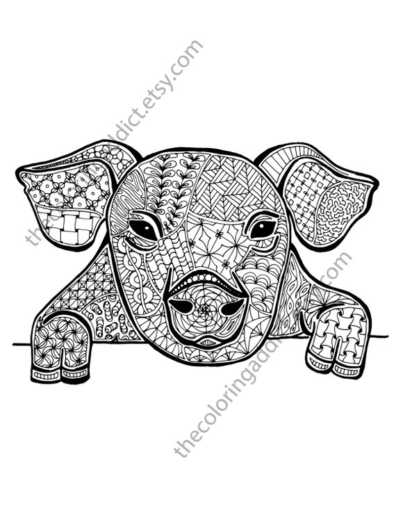 pig coloring sheet animal coloring pdf zentangle colouring