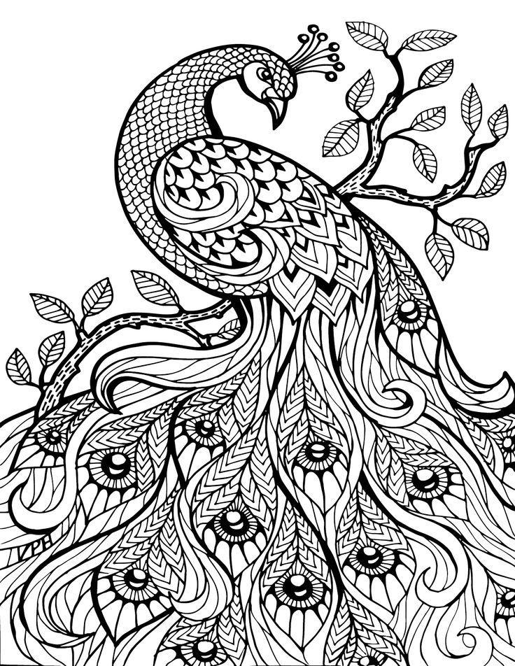 pin em adult coloring book animals