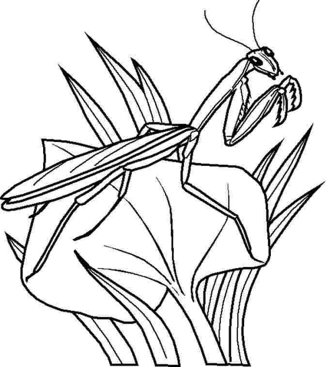 printable coloring sheets bugs printable bug coloring pages