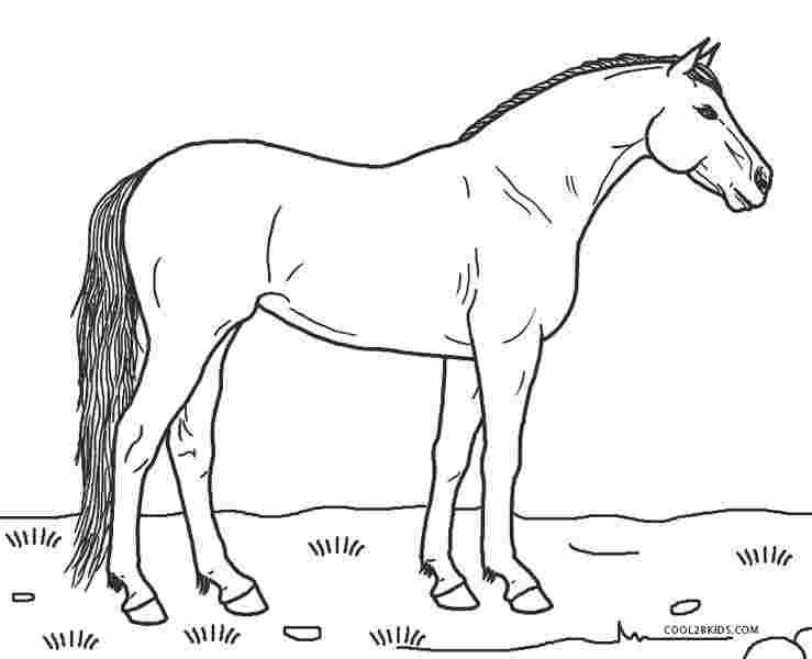 printable coloring sheets horses free printable horse