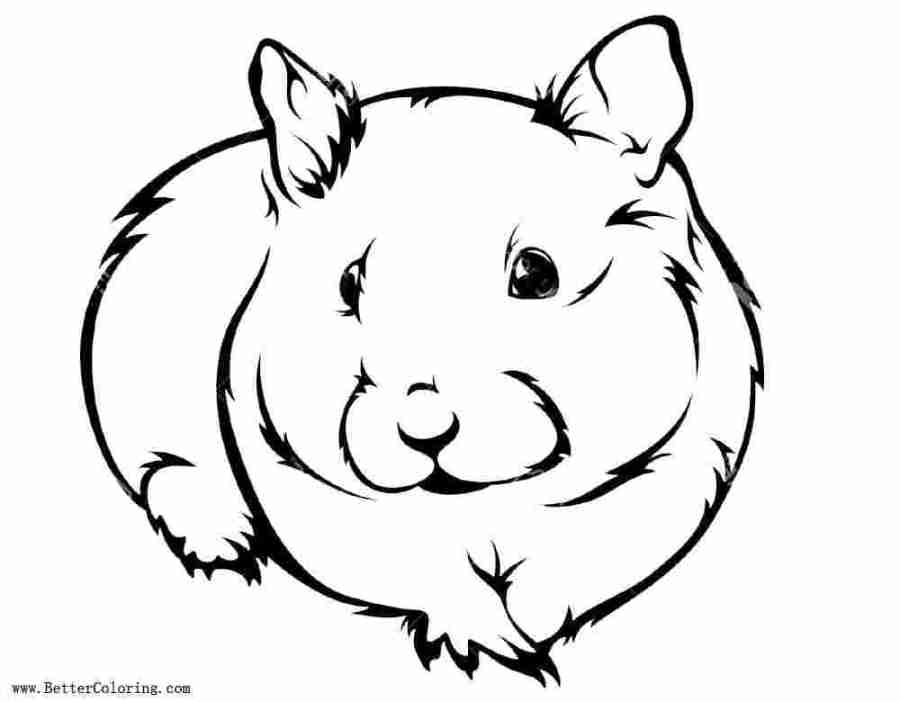 printable cute hamster coloring pages hamster coloring pages