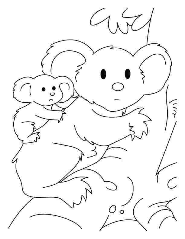 printable koala coloring pages free printable koala coloring