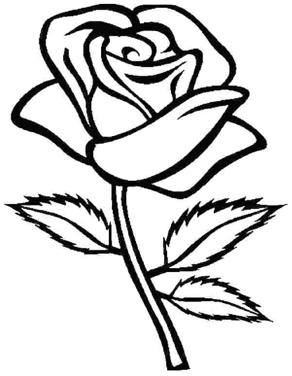 printable rose coloring pages for everyone rose coloring