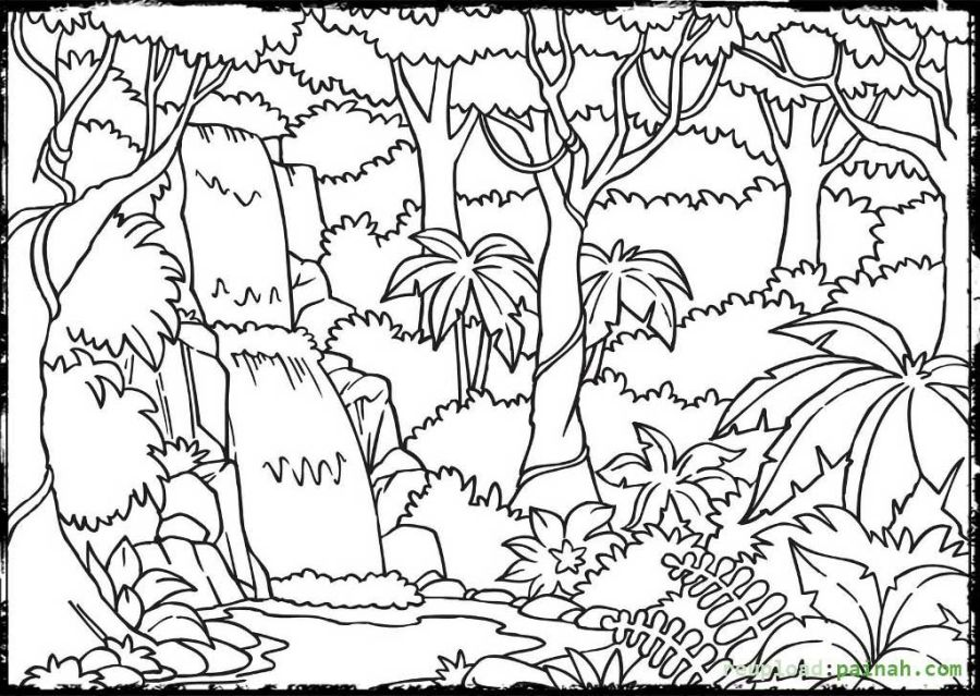 rainforest coloring pages enchanted forest coloring book