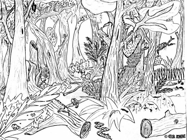 realistic forest coloring pages gallery fun for kids