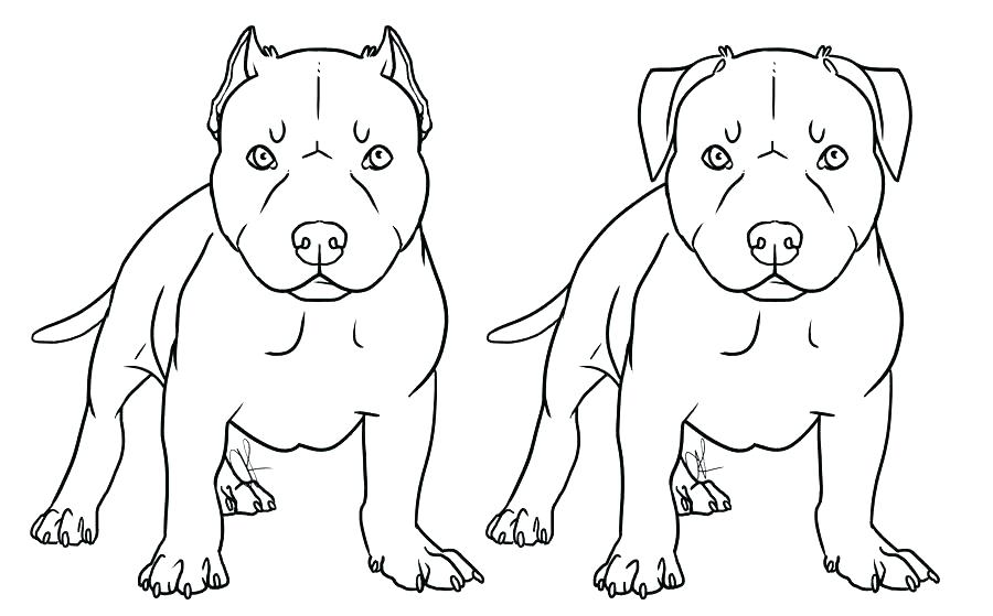 realistic pitbull coloring pages