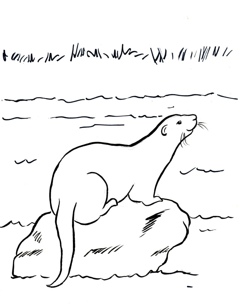river otter coloring page art starts for kids