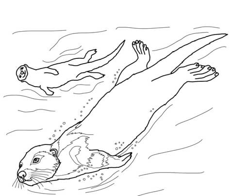 sea otter coloring page free printable coloring pages