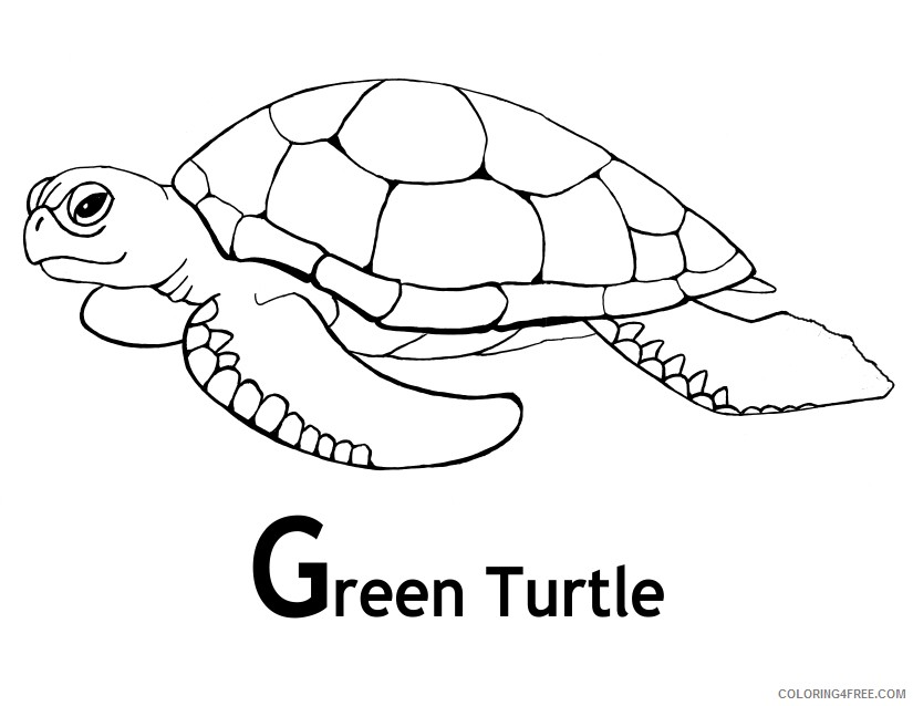 sea turtle coloring pages green turtle coloring4free