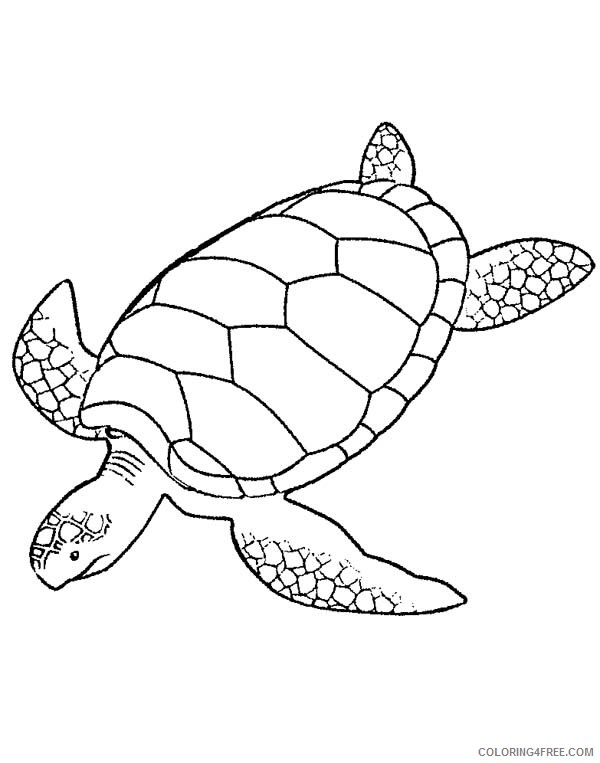 sea turtle coloring pages printable coloring4free